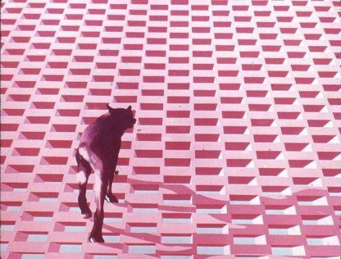 henri-cueco-chien-sur-un-mur-1976